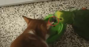 Gato y loro comiendo juntos