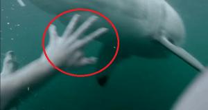 A punto de morir ante un gran tiburón blanco asesino
