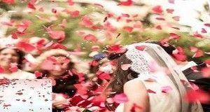 Set de cañones de pétalos de rosas