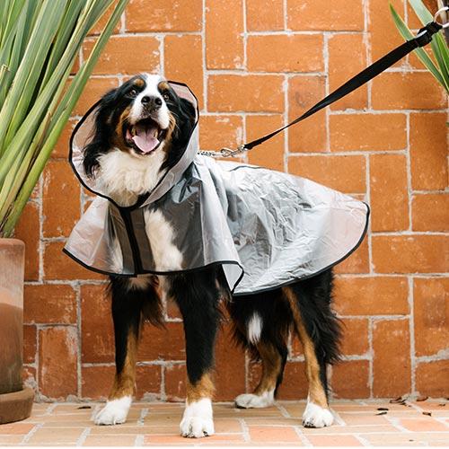 impermeable grande para perro de color negro